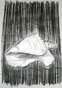 schelp1